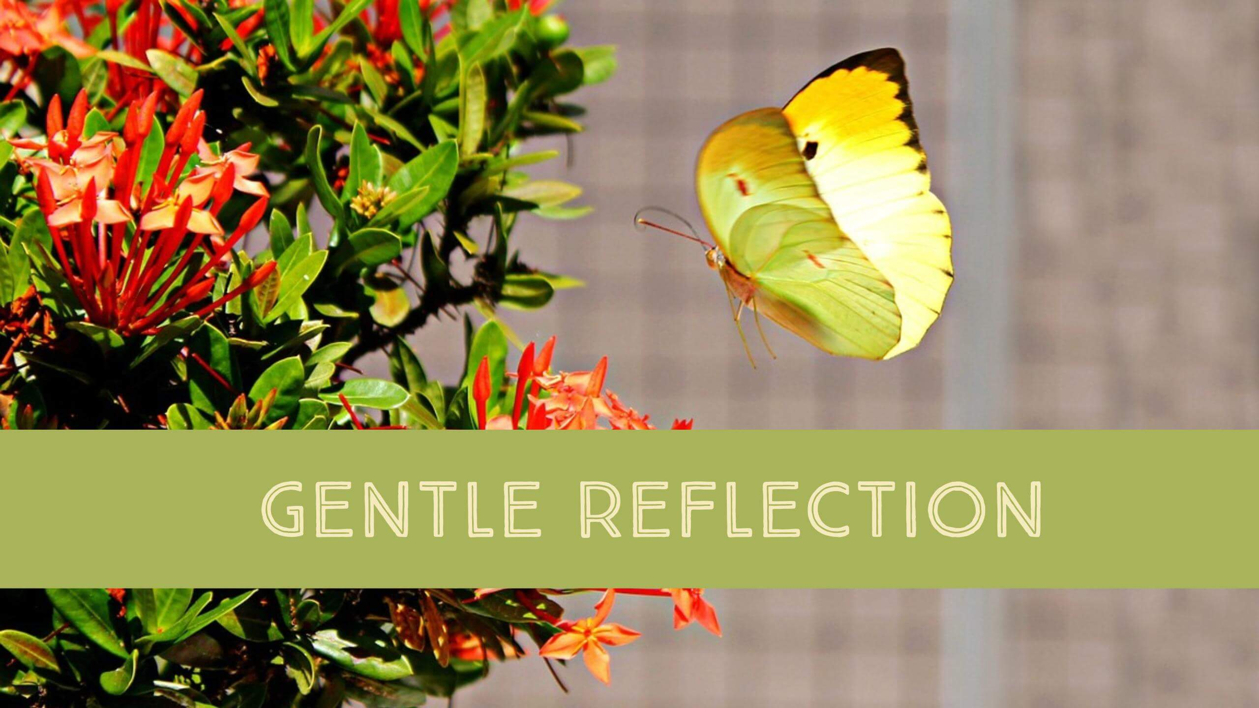 Gentle Reflection June 30